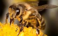 Аренда пчёл +7 (861) 238-83-61