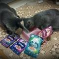 Отзыв о Шермурр: Любимый ком наших котов!