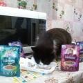 Отзыв о Шермурр паучи: Отличный корм для кошек!