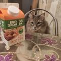 Отзыв о ЭкоНива-АПК Холдинг: У меня даже кот балдеет от персикового йогурта