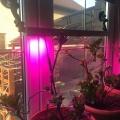 """Отзыв о фито светильник: Оконная светодиодная лампа для растений """"Васат"""" 30Вт"""
