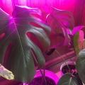 """Отзыв о Светильник на удобных присосках для растений на подоконнике """"Майя"""": Светильник на удобных присосках для растений на подоконнике """"Майя"""""""
