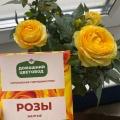 Отзыв о Королевские Гибридные Розы Домашний Цветовод: Королевские Гибридные Розы Домашний Цветовод