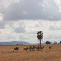 Отзыв о Сафари-Занзибари: Спасибо за организацию двухдневного сафари!